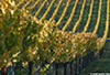 Sanders_Road_1477_Vineyards_web.jpg